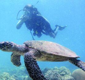 « Nosy Tanikely» - Un aquarium naturel à découvrir
