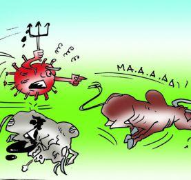 La Fièvre de la Vallée du Rift frappe de nouveau - Un millier de têtes de cheptel atteint
