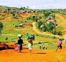 Région Menabe - La mafia des bois précieux fait parler d'elle